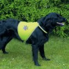 Ohutusvest Safety Vest for dogs XS HELKUR
