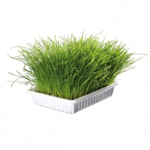 Трава для кошек БИО, 100 г